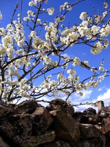 spring-has-sprung-1387561