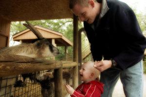 petting-zoo-1398807
